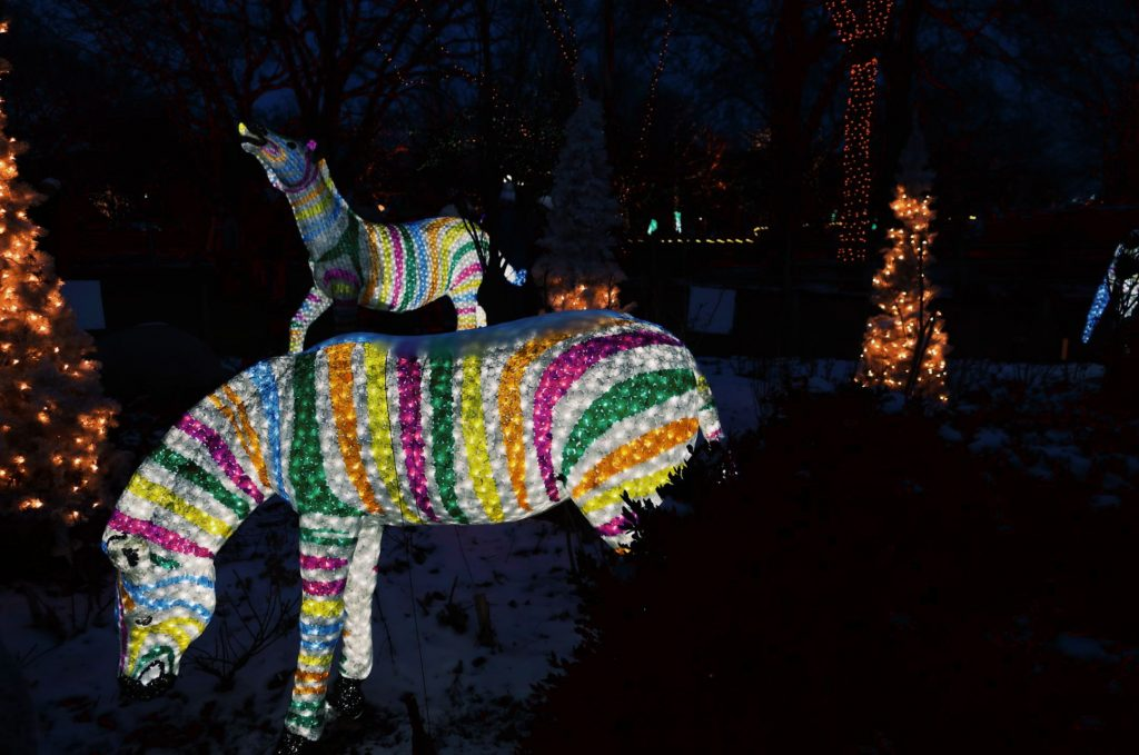 zoo lights in Chicago