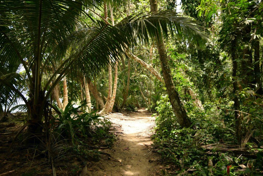 Tortuguero jungle