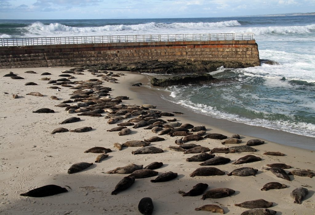 Sea lions on a beach in san diego