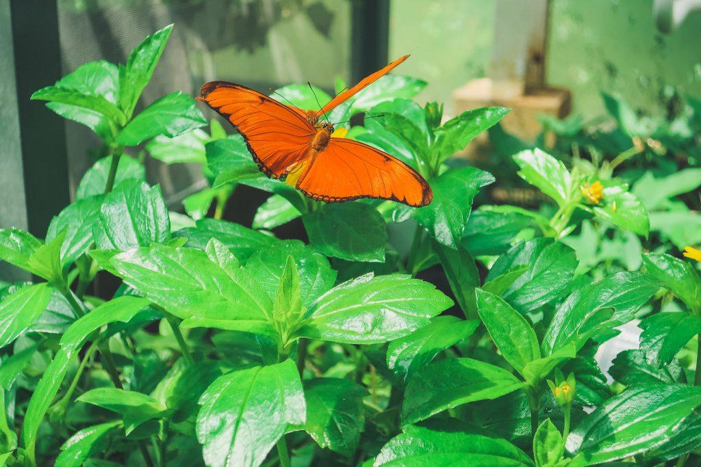 Amsterdam Botanical Garden's butterfly garden
