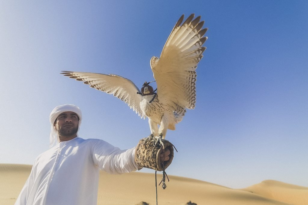 falconry in the UAE, man holds outstretched arm to bird in the desert