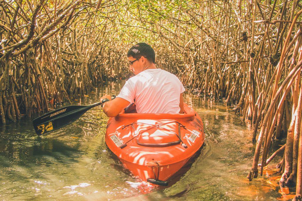 Mangroves in Dubai