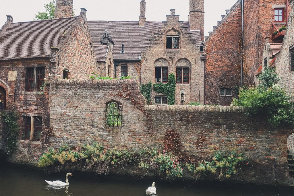 Quay of the Rosary. Bruges, swan