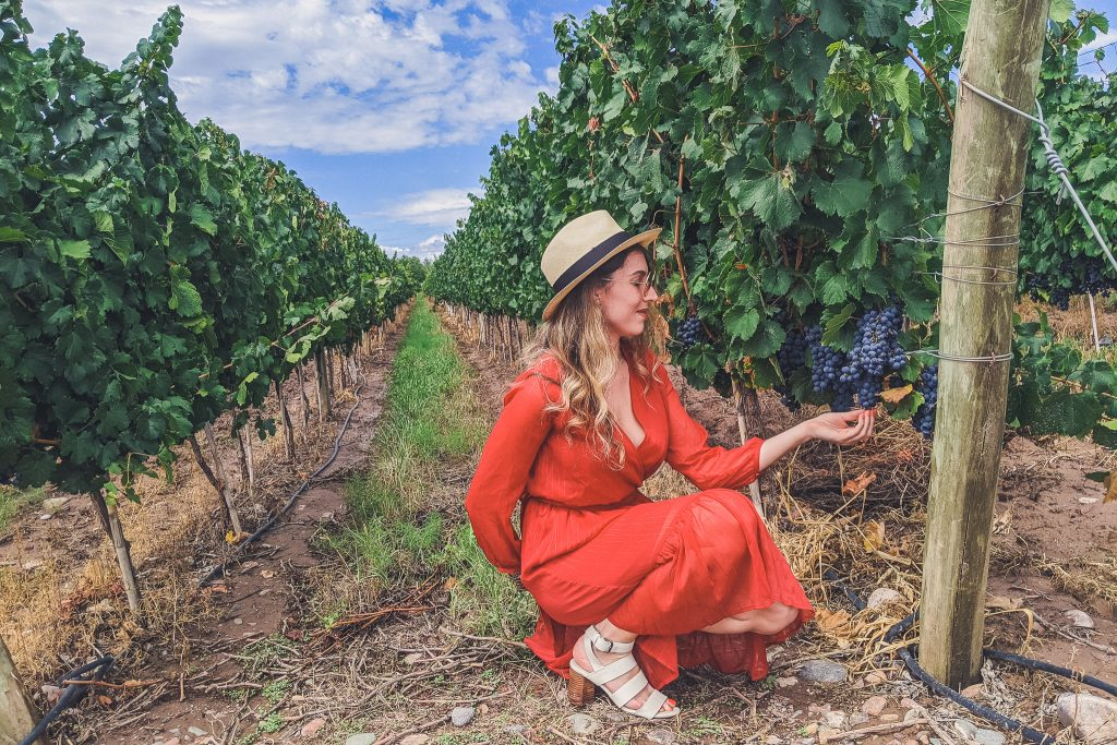 girl stands in row of vineyards holding grape bundle