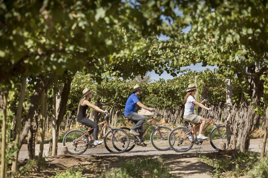 Agostino Winery, bike tour