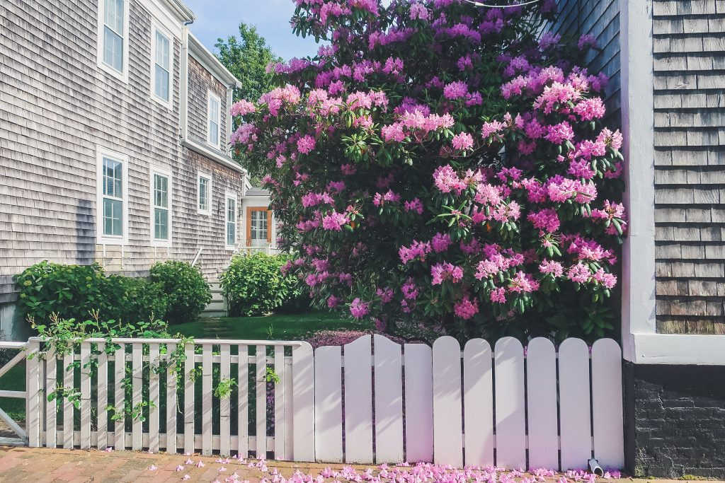 flowers in Nantucket, pretty landscaping