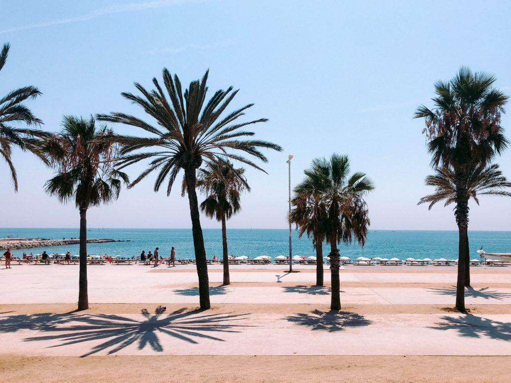 Palm trees in Barcelona Spain