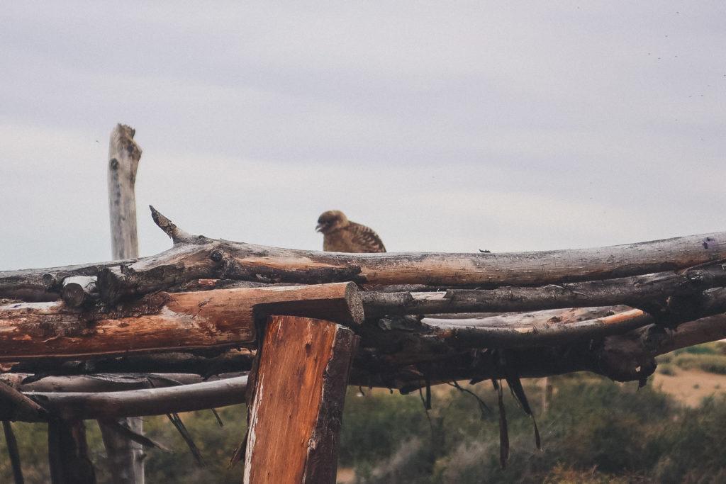 bird at Laguna Nimez