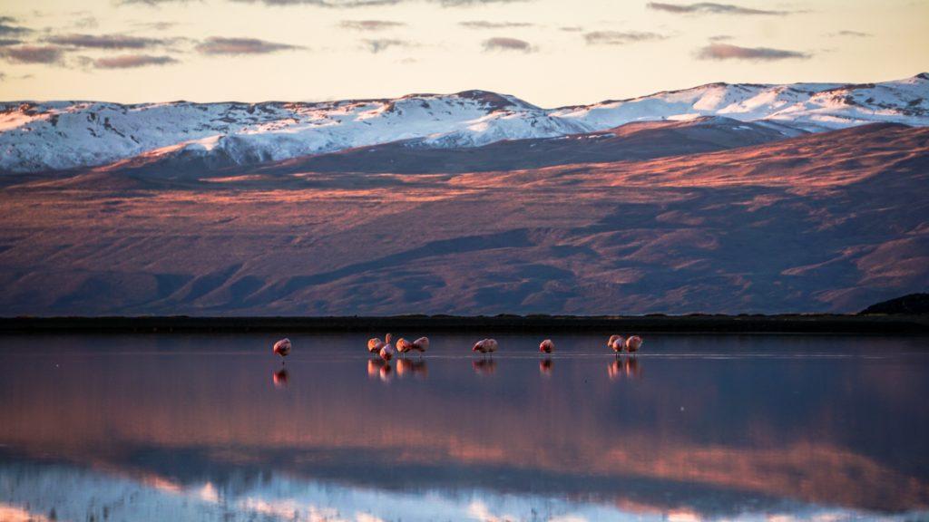 flamingos at Lake Argentino